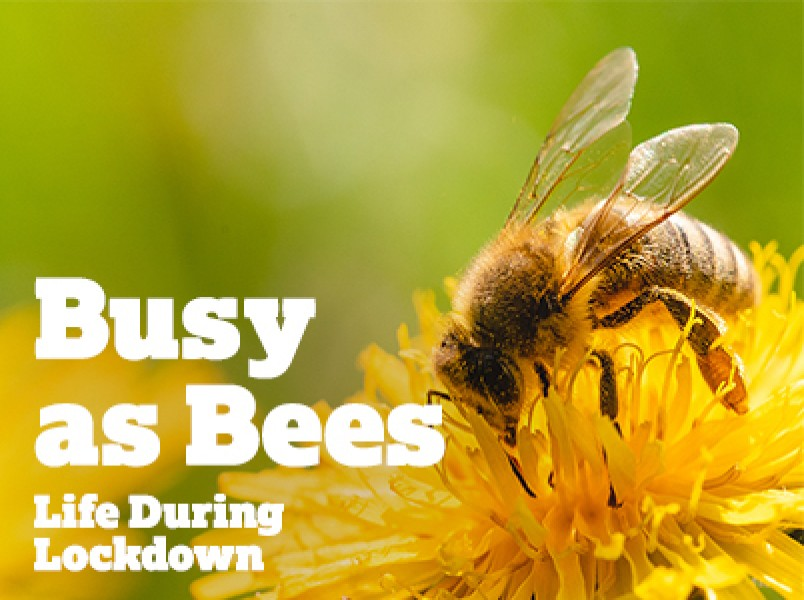 Busy as Bees: Life during Lockdown...